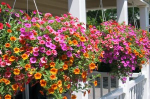 TUFF-GUARD-The-Perfect-Garden-Hose_10-Hanging-Basket-Essentials